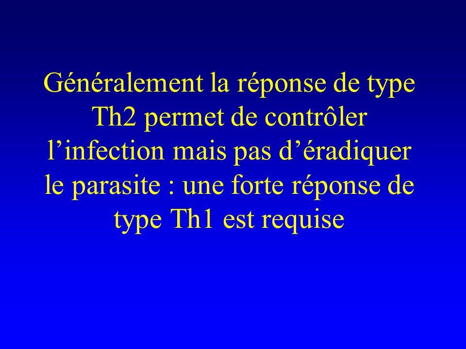 Autre exemple de polarisation Th1/Th2 dans une réponse anti- parasitaire : la leishmaniose
