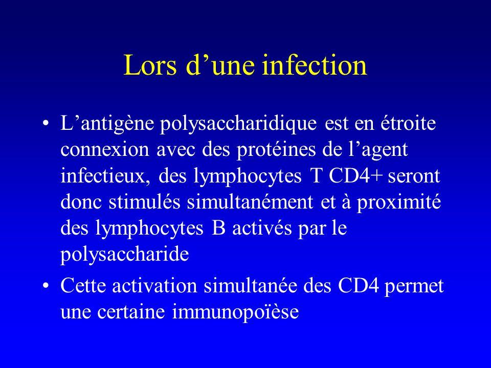 Vaccin purement polysaccharidique Pas daide des lymphocytes T CD4 IgM mais pas dautres sous-classes Pas de mémoire –Intérêt à conjuguer le polysaccharide avec une protéine pour recruter une aide indirecte des lymphocytes T CD4