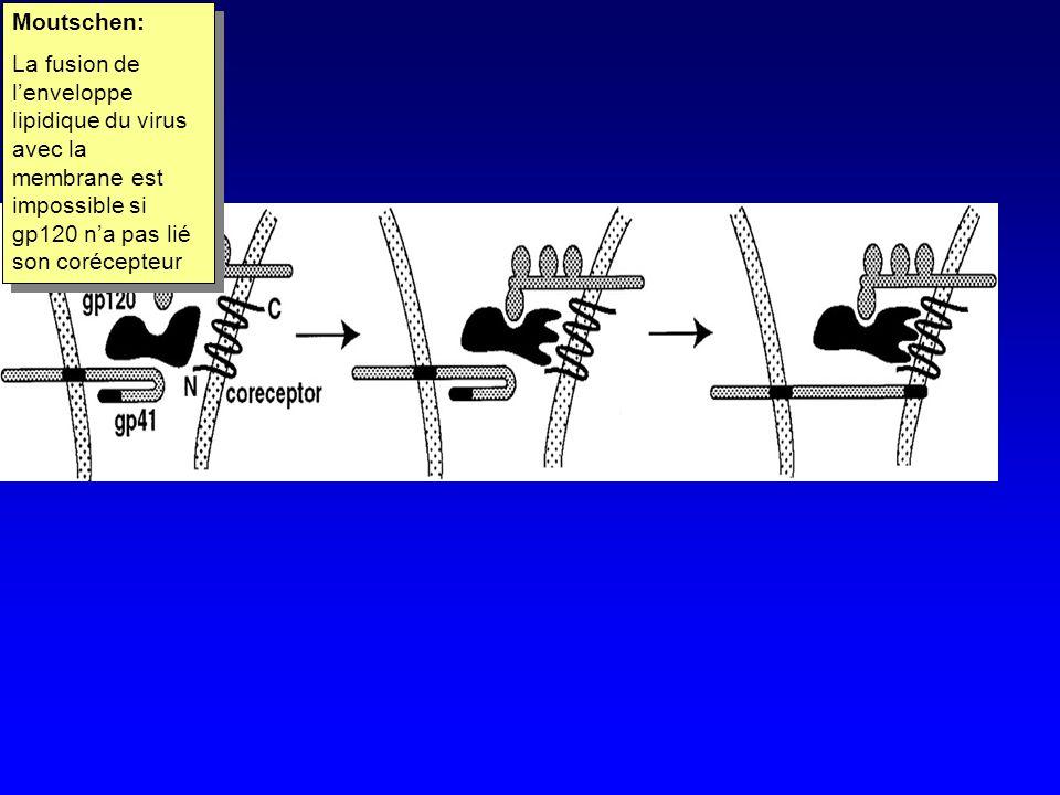 Moutschen: La fusion de lenveloppe lipidique du virus avec la membrane est impossible si gp120 na pas lié son corécepteur Moutschen: La fusion de lenveloppe lipidique du virus avec la membrane est impossible si gp120 na pas lié son corécepteur