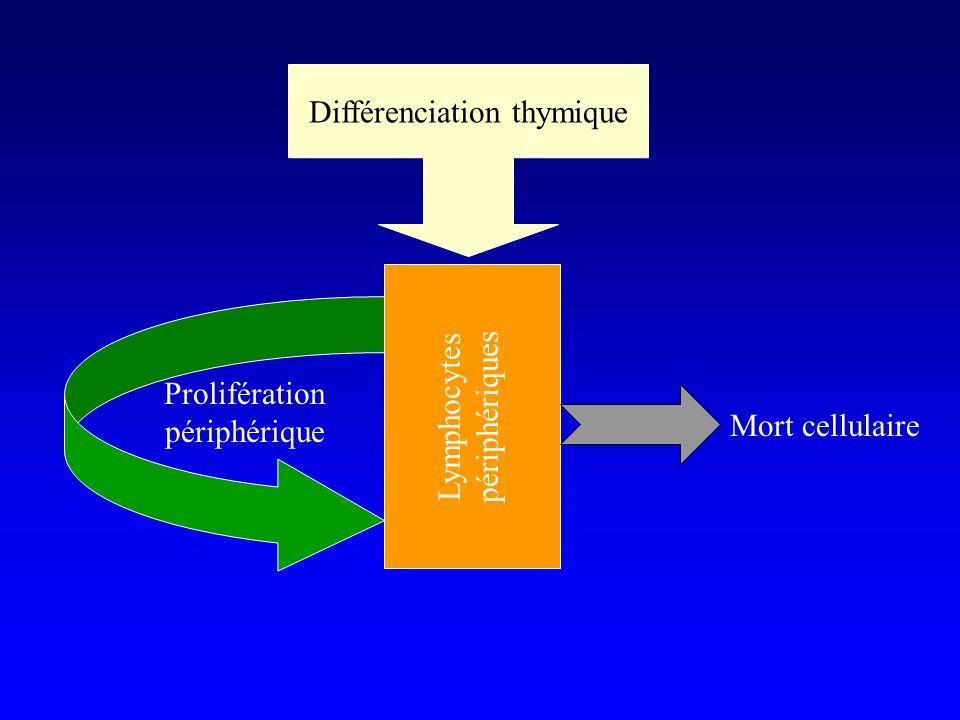 Mort cellulaire Prolifération périphérique Différenciation thymique Lymphocytes périphériques