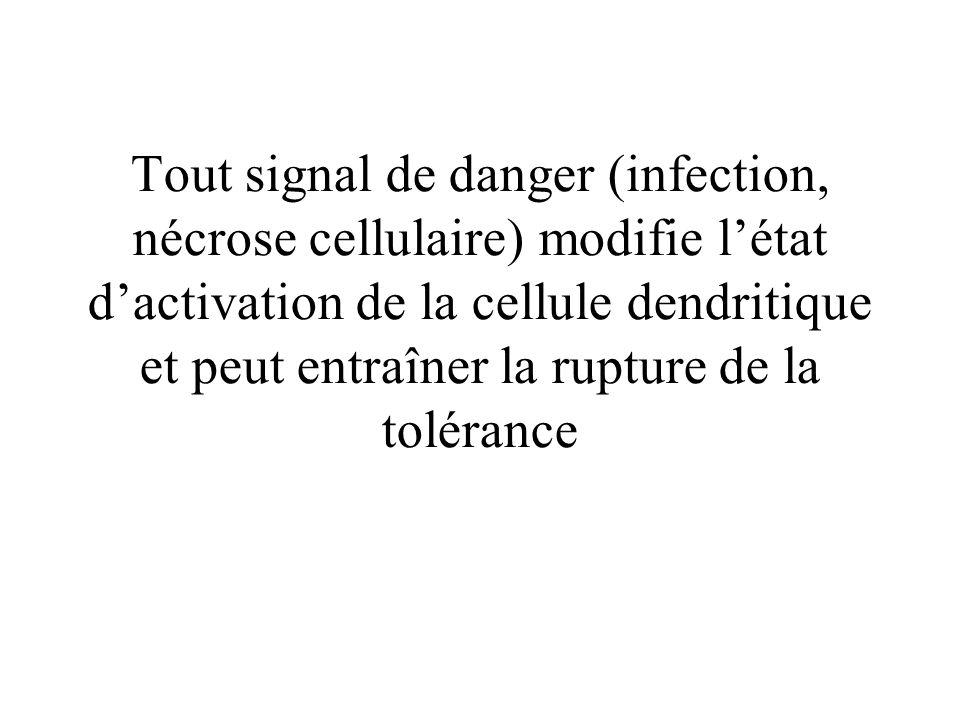 Tout signal de danger (infection, nécrose cellulaire) modifie létat dactivation de la cellule dendritique et peut entraîner la rupture de la tolérance