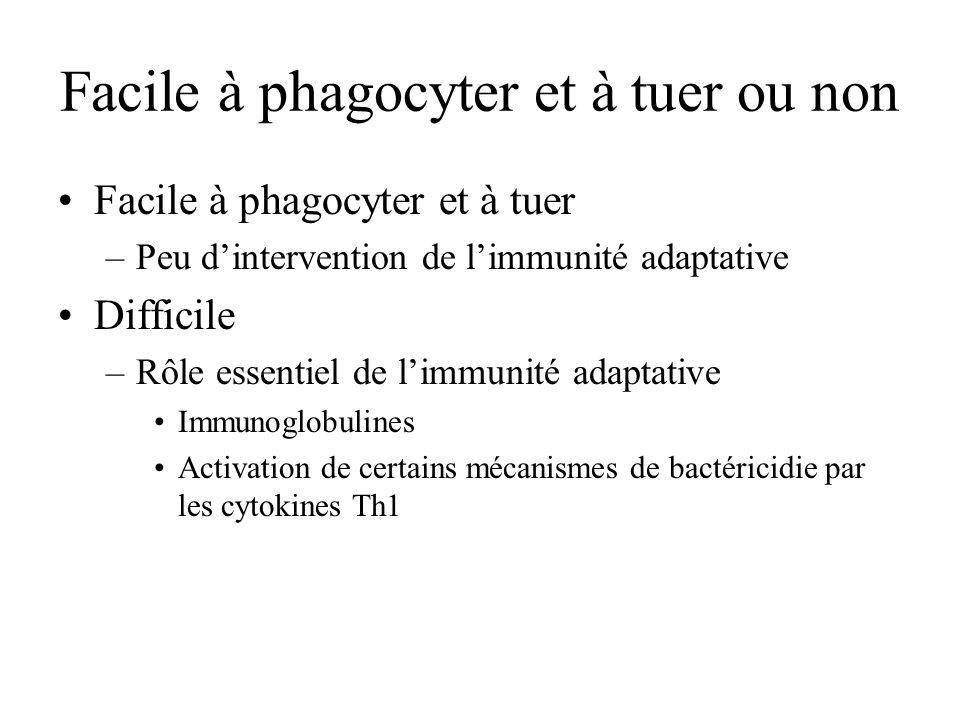 Facile à phagocyter et à tuer ou non Facile à phagocyter et à tuer –Peu dintervention de limmunité adaptative Difficile –Rôle essentiel de limmunité a