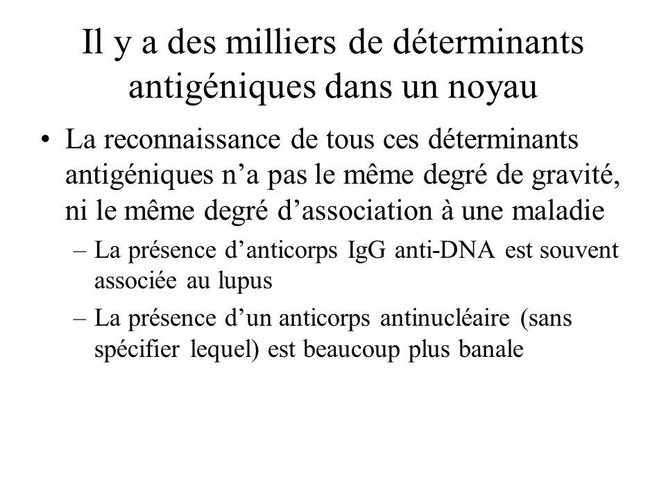 Il y a des milliers de déterminants antigéniques dans un noyau La reconnaissance de tous ces déterminants antigéniques na pas le même degré de gravité