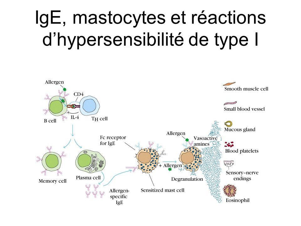 IgE, mastocytes et réactions dhypersensibilité de type I