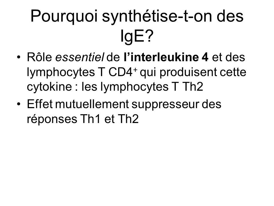 Pourquoi synthétise-t-on des IgE? Rôle essentiel de linterleukine 4 et des lymphocytes T CD4 + qui produisent cette cytokine : les lymphocytes T Th2 E