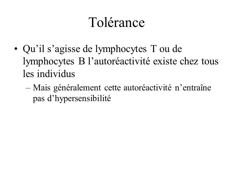 Tolérance Quil sagisse de lymphocytes T ou de lymphocytes B lautoréactivité existe chez tous les individus –Mais généralement cette autoréactivité nen