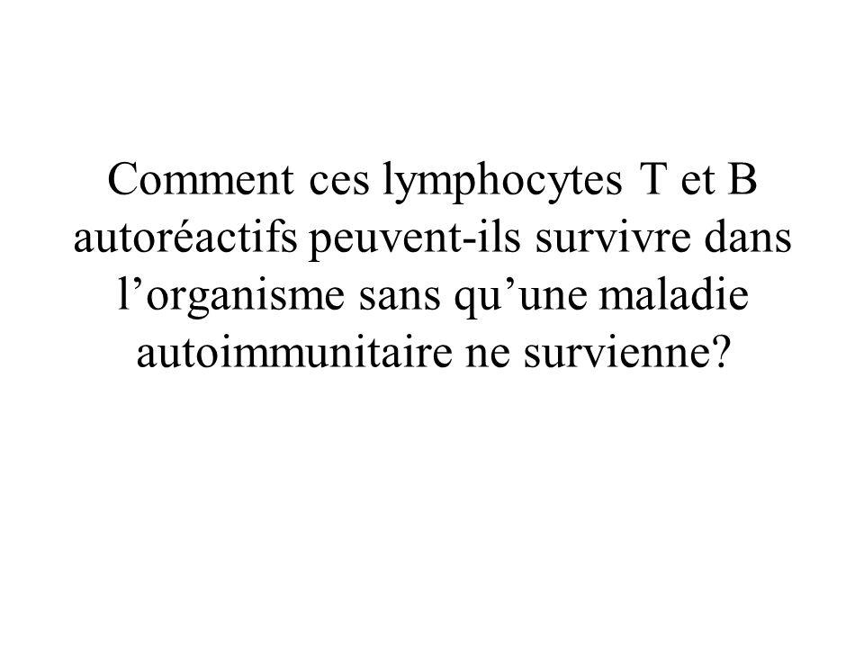 Comment ces lymphocytes T et B autoréactifs peuvent-ils survivre dans lorganisme sans quune maladie autoimmunitaire ne survienne?