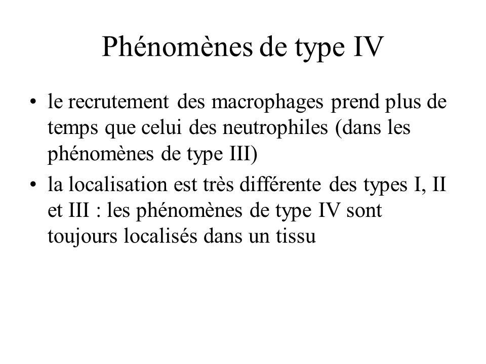 Phénomènes de type IV le recrutement des macrophages prend plus de temps que celui des neutrophiles (dans les phénomènes de type III) la localisation