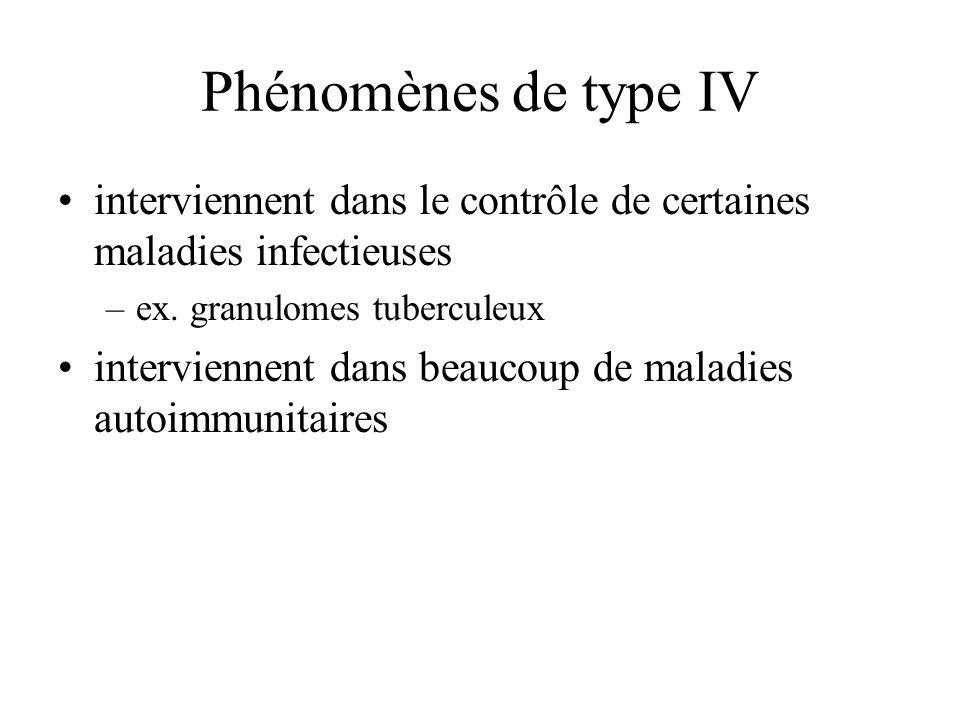 Phénomènes de type IV interviennent dans le contrôle de certaines maladies infectieuses –ex. granulomes tuberculeux interviennent dans beaucoup de mal