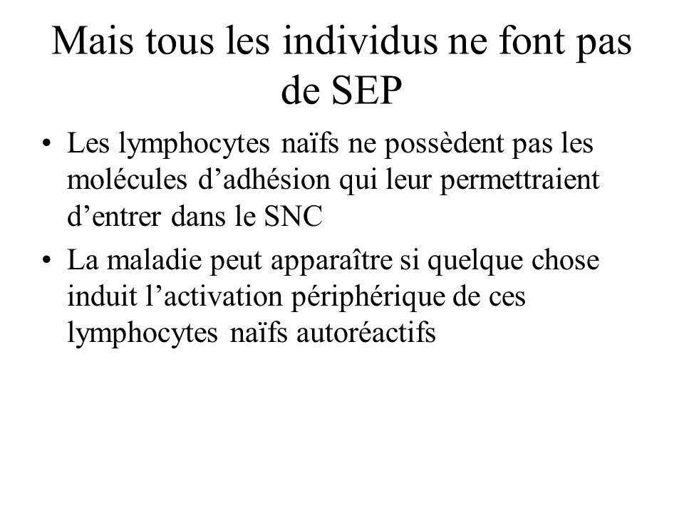 Mais tous les individus ne font pas de SEP Les lymphocytes naïfs ne possèdent pas les molécules dadhésion qui leur permettraient dentrer dans le SNC L
