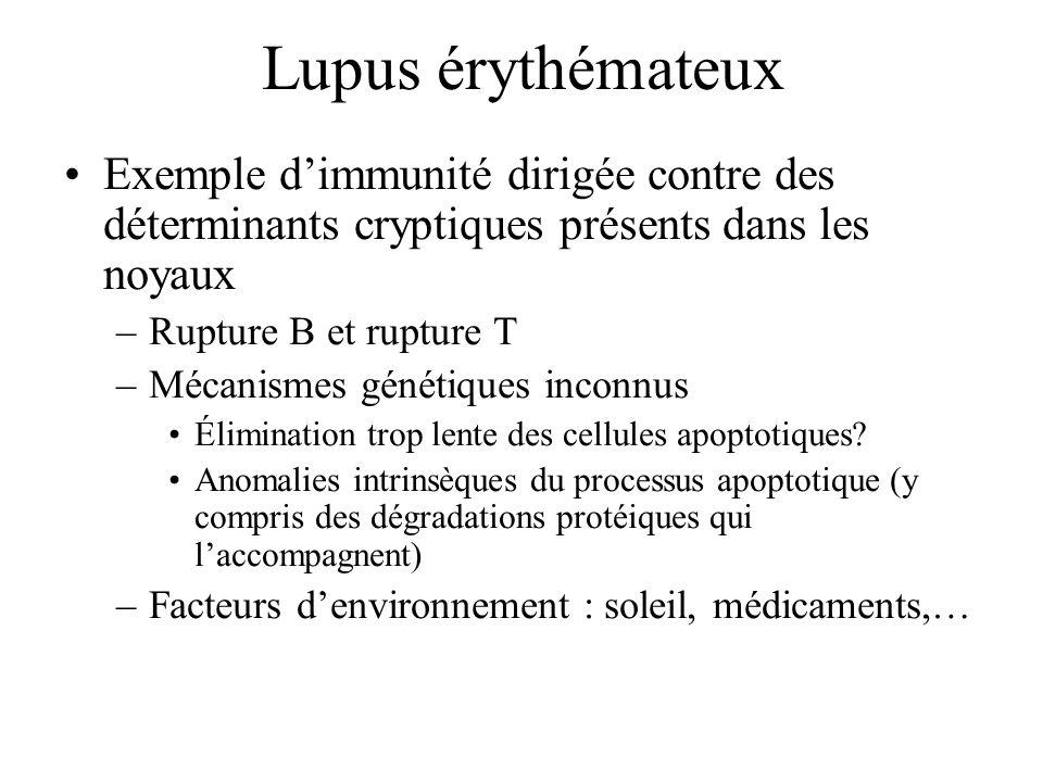 Lupus érythémateux Exemple dimmunité dirigée contre des déterminants cryptiques présents dans les noyaux –Rupture B et rupture T –Mécanismes génétique