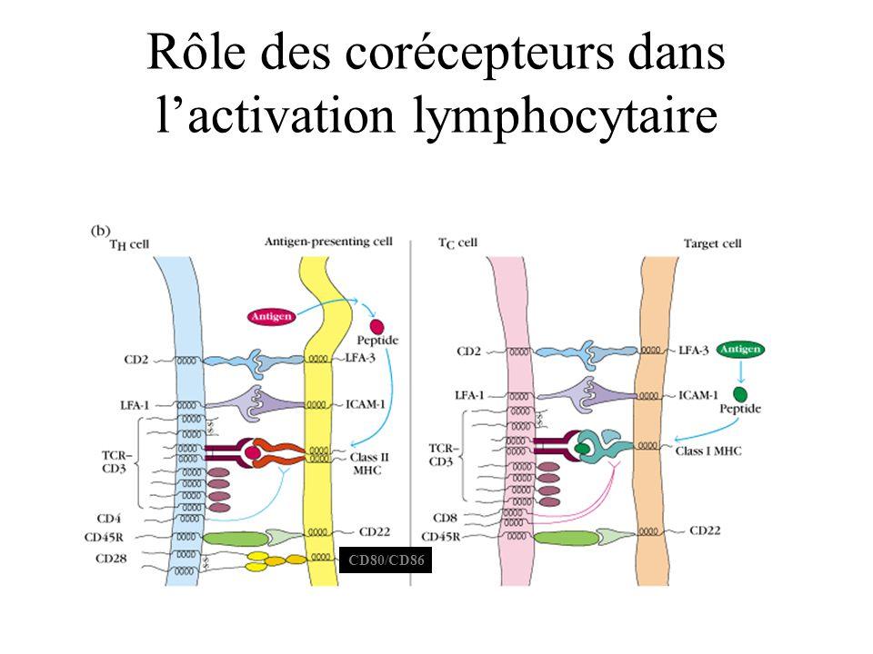 Rôle des corécepteurs dans lactivation lymphocytaire CD80/CD86