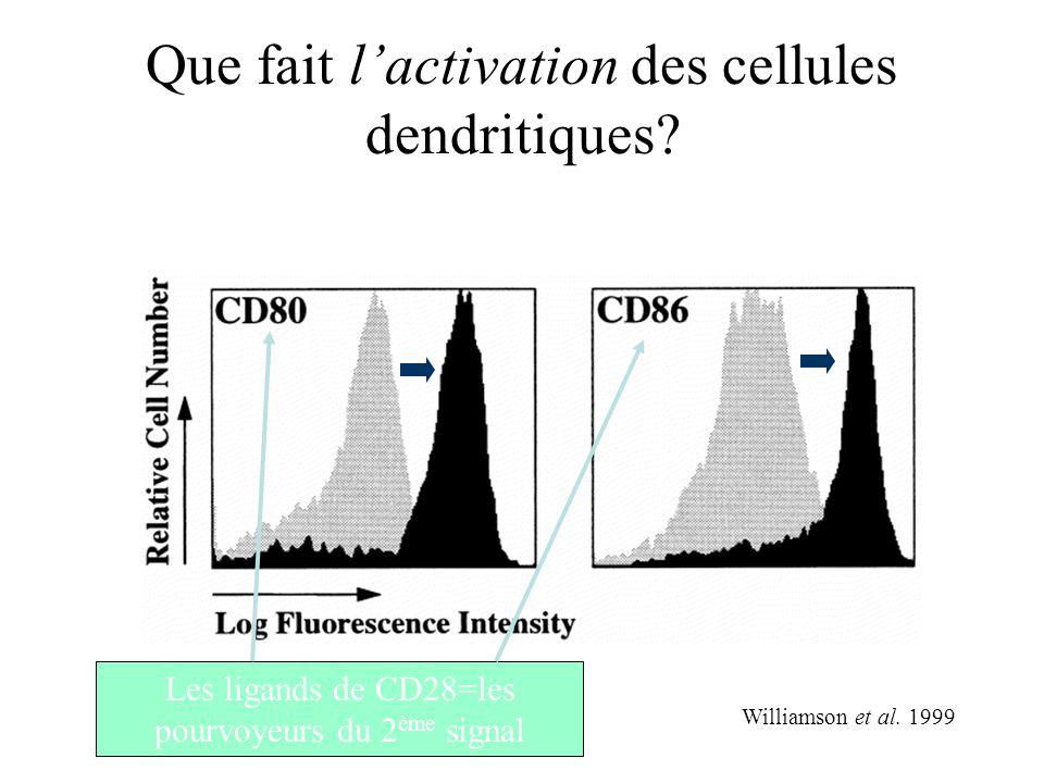 Que fait lactivation des cellules dendritiques? Williamson et al. 1999 Les ligands de CD28=les pourvoyeurs du 2 ème signal