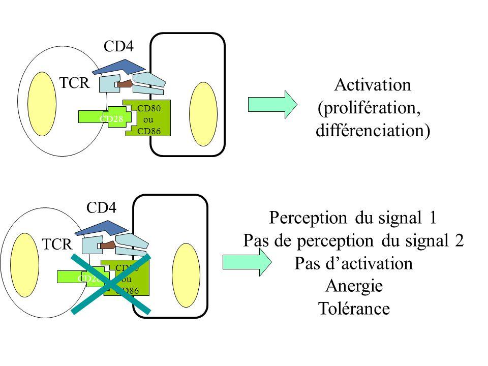 TCR CD4 Perception du signal 1 Pas de perception du signal 2 Pas dactivation Anergie Tolérance CD28 CD80 ou CD86 CD28 TCR CD4 CD80 ou CD86 Activation