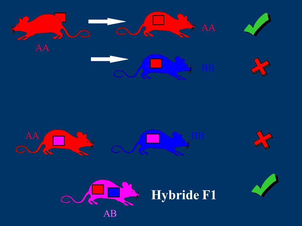 AA BB AABB Hybride F1 AB
