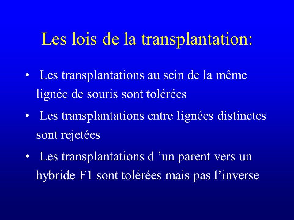 Les lois de la transplantation: Les transplantations au sein de la même lignée de souris sont tolérées Les transplantations entre lignées distinctes s