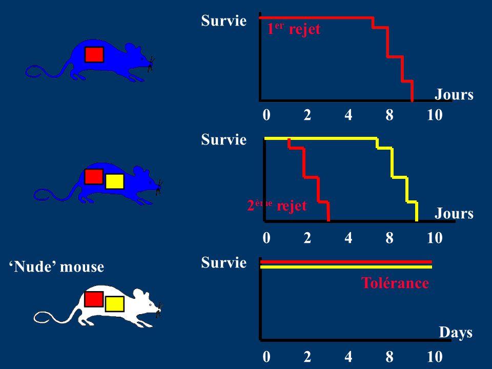 024810 Jours Survie 024810 Jours 024810 Days Survie 1 er rejet 2 ème rejet Tolérance Nude mouse