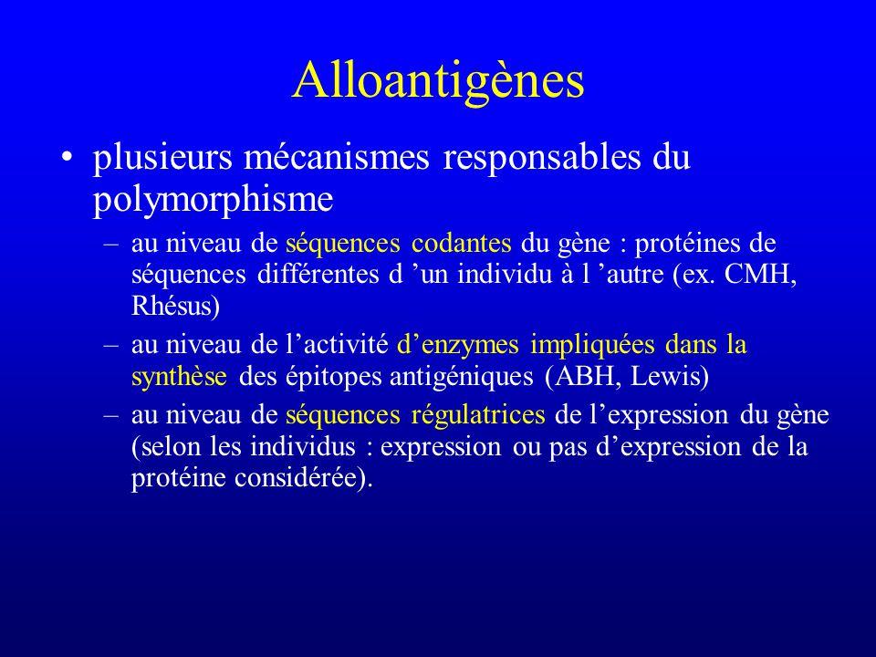 plusieurs mécanismes responsables du polymorphisme –au niveau de séquences codantes du gène : protéines de séquences différentes d un individu à l aut