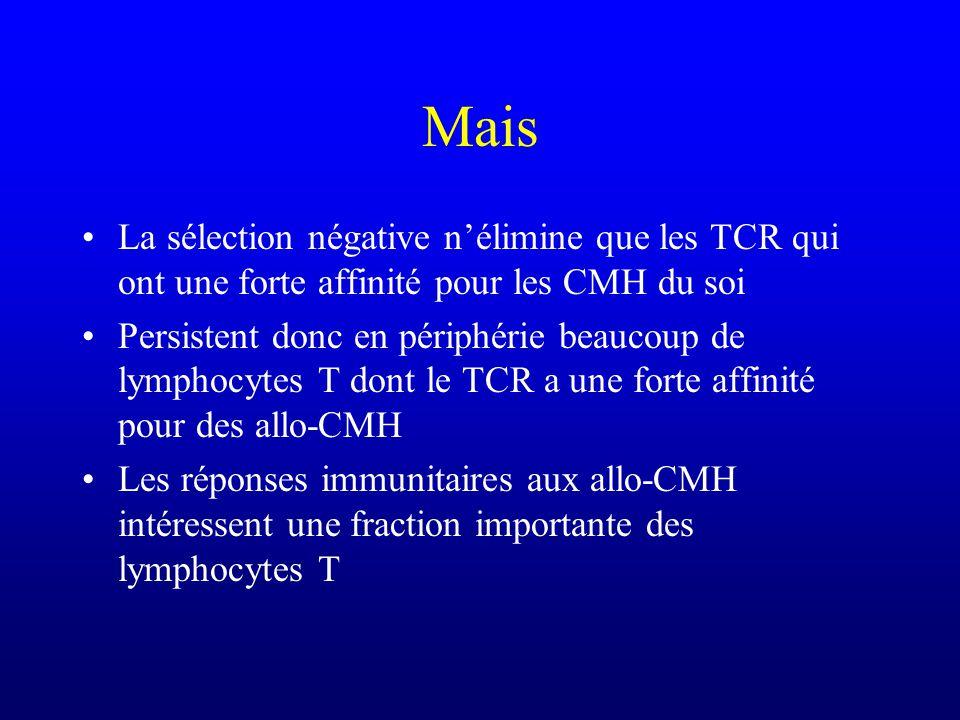 Mais La sélection négative nélimine que les TCR qui ont une forte affinité pour les CMH du soi Persistent donc en périphérie beaucoup de lymphocytes T