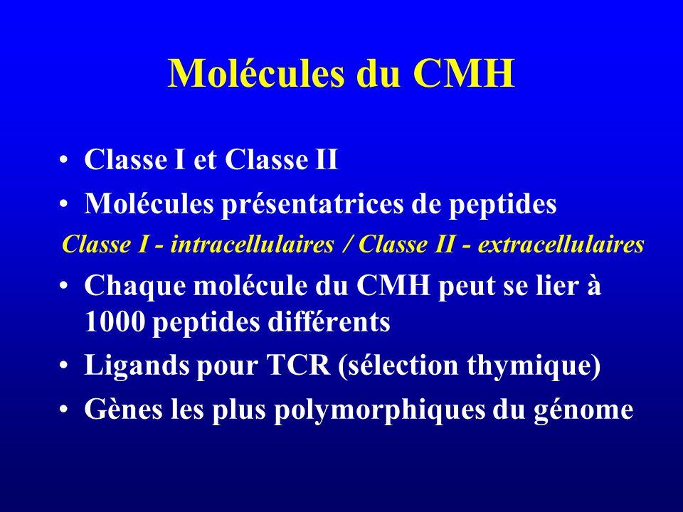 Molécules du CMH Classe I et Classe II Molécules présentatrices de peptides Classe I - intracellulaires / Classe II - extracellulaires Chaque molécule