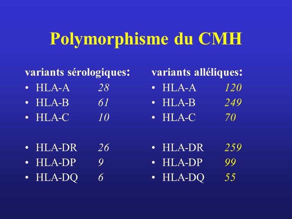 Polymorphisme du CMH variants sérologiques : HLA-A 28 HLA-B61 HLA-C10 HLA-DR26 HLA-DP9 HLA-DQ6 variants alléliques : HLA-A 120 HLA-B249 HLA-C70 HLA-DR