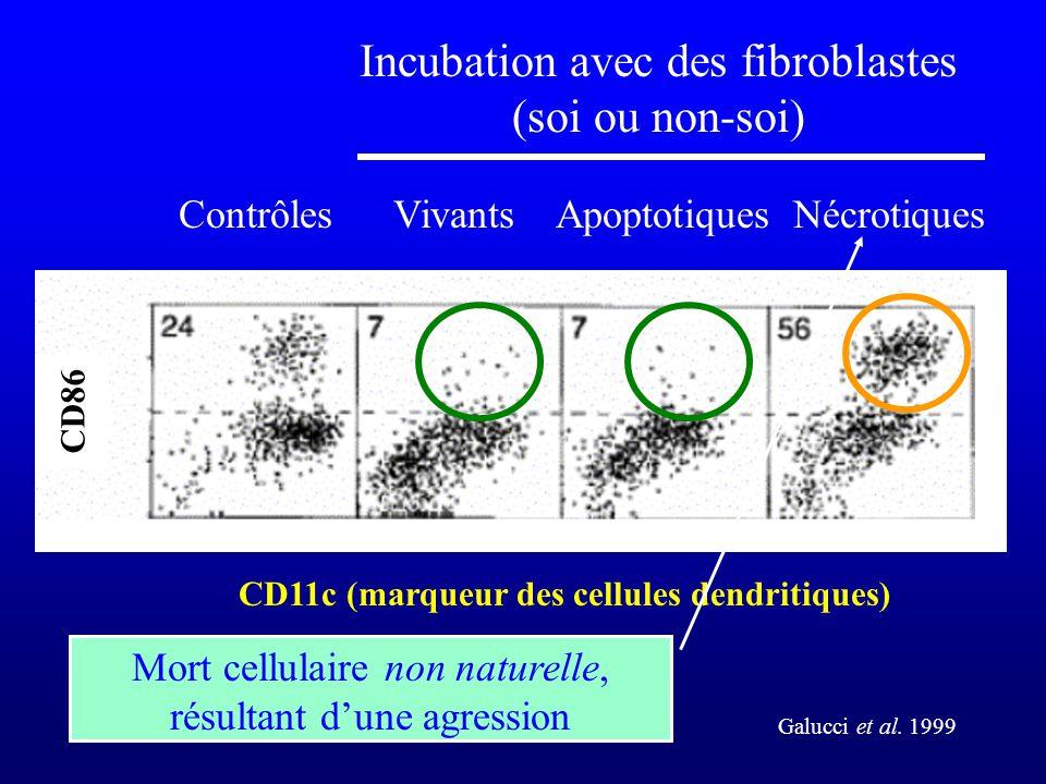 CD11c (marqueur des cellules dendritiques) CD86 Galucci et al. 1999 ContrôlesVivantsApoptotiquesNécrotiques Incubation avec des fibroblastes (soi ou n
