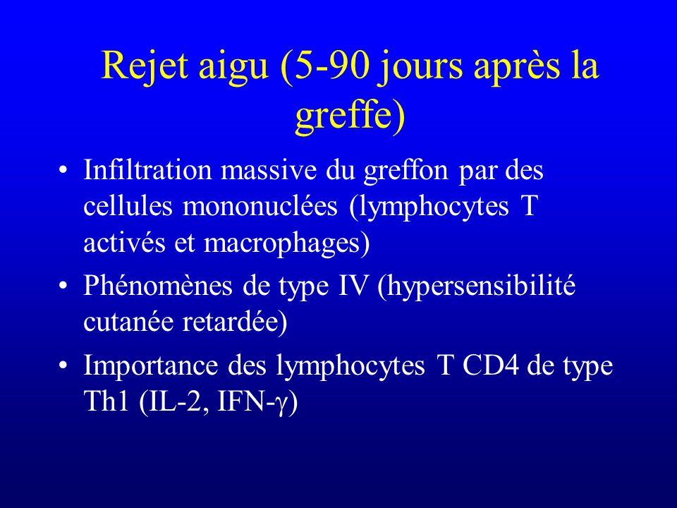 Rejet aigu (5-90 jours après la greffe) Infiltration massive du greffon par des cellules mononuclées (lymphocytes T activés et macrophages) Phénomènes