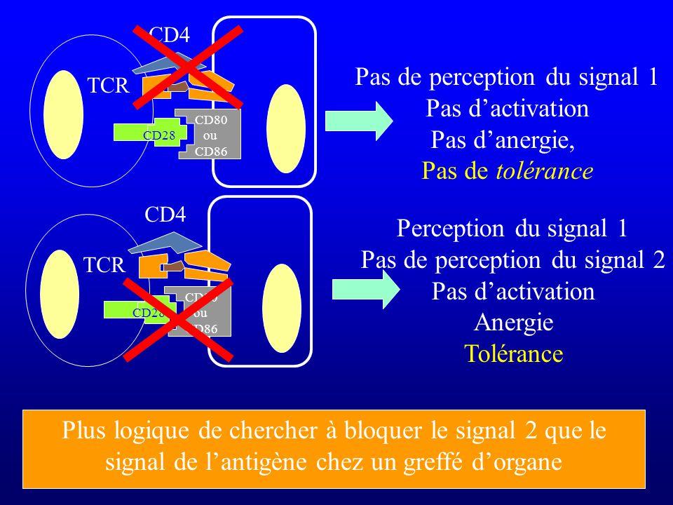 CD28 TCR CD4 CD80 ou CD86 Pas de perception du signal 1 Pas dactivation Pas danergie, Pas de tolérance TCR CD4 Perception du signal 1 Pas de perceptio