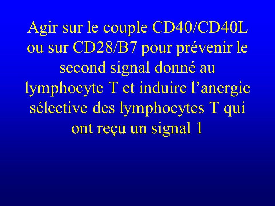 Agir sur le couple CD40/CD40L ou sur CD28/B7 pour prévenir le second signal donné au lymphocyte T et induire lanergie sélective des lymphocytes T qui