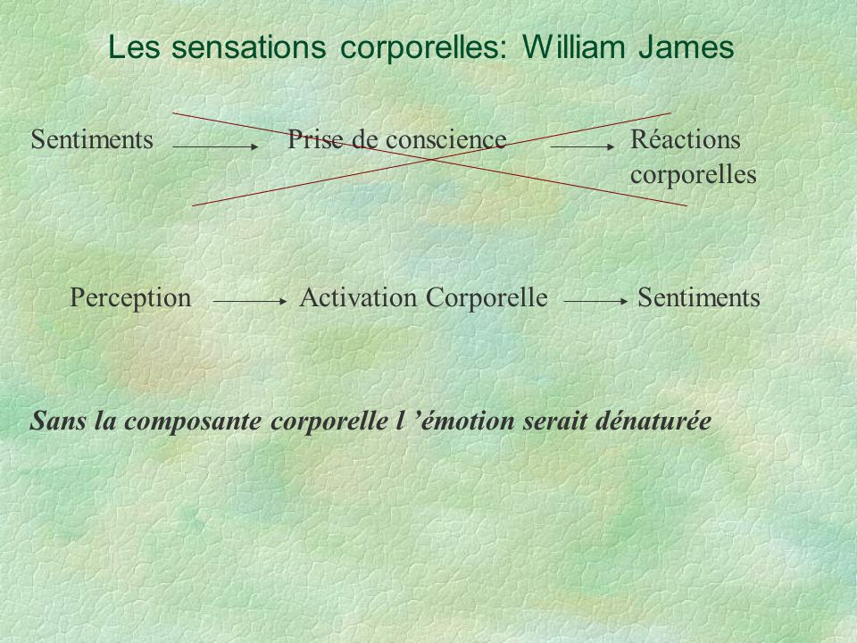 Les sensations corporelles: William James SentimentsPrise de conscienceRéactions corporelles Perception Activation Corporelle Sentiments Sans la compo
