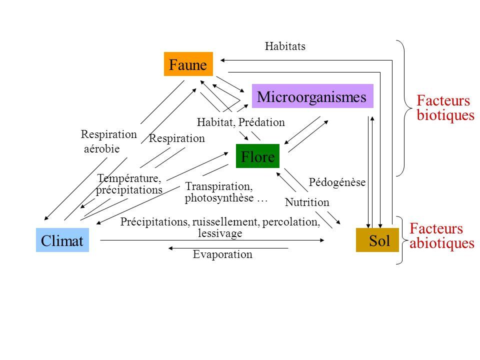 Respiration Précipitations, ruissellement, percolation, lessivage Evaporation Habitats Pédogénèse Nutrition Température, précipitations Transpiration,