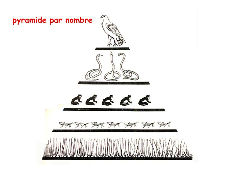 pyramide par nombre