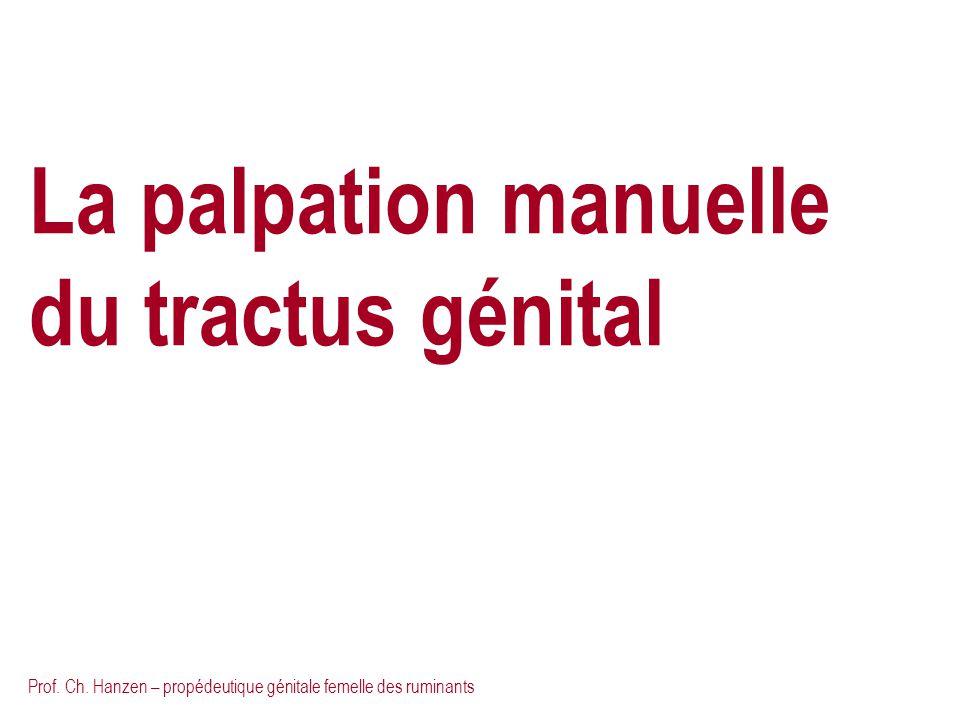 Prof. Ch. Hanzen – propédeutique génitale femelle des ruminants La palpation manuelle du tractus génital