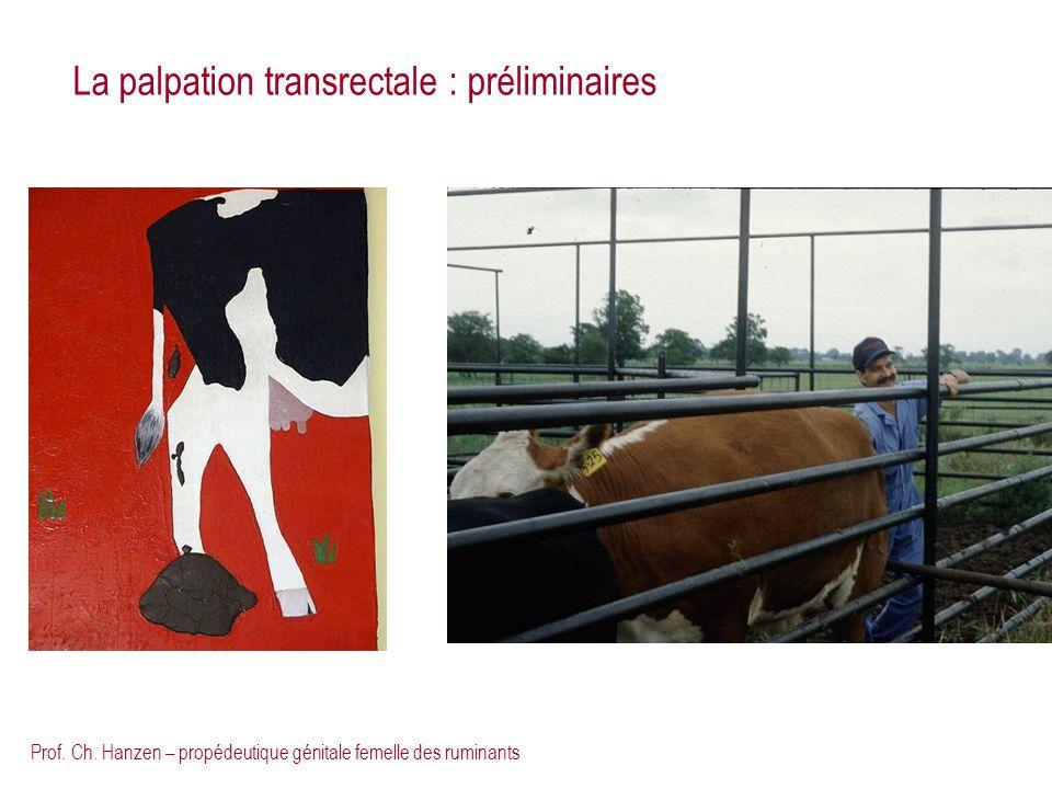 Prof. Ch. Hanzen – propédeutique génitale femelle des ruminants La palpation transrectale : préliminaires