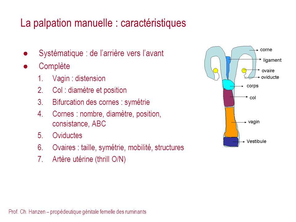 Prof. Ch. Hanzen – propédeutique génitale femelle des ruminants La palpation manuelle : caractéristiques Systématique : de larrière vers lavant Complè