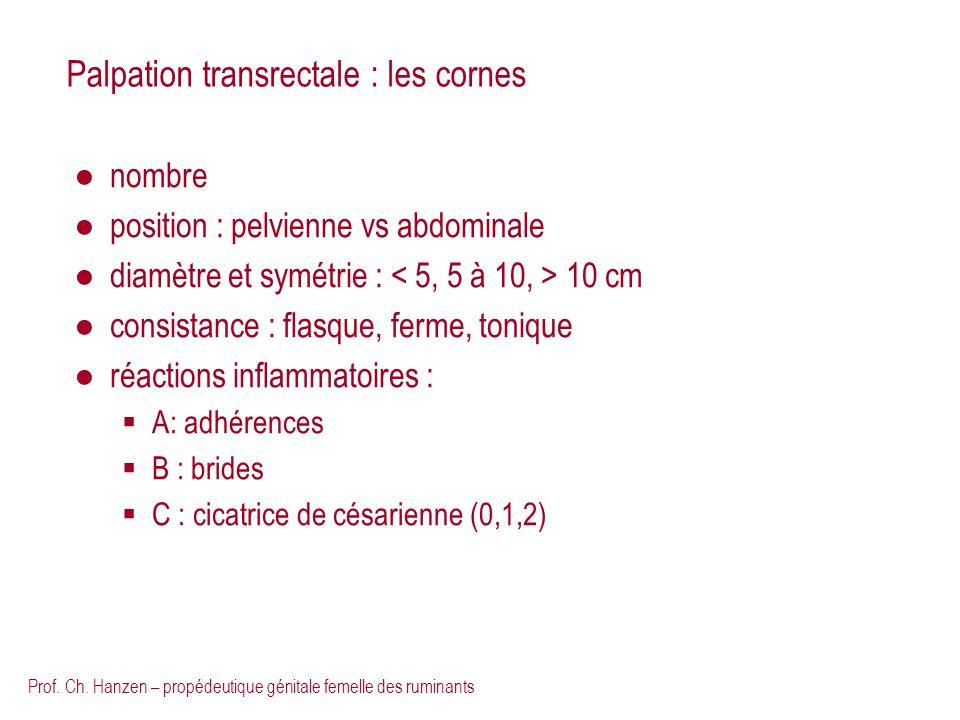 Prof. Ch. Hanzen – propédeutique génitale femelle des ruminants Palpation transrectale : les cornes nombre position : pelvienne vs abdominale diamètre