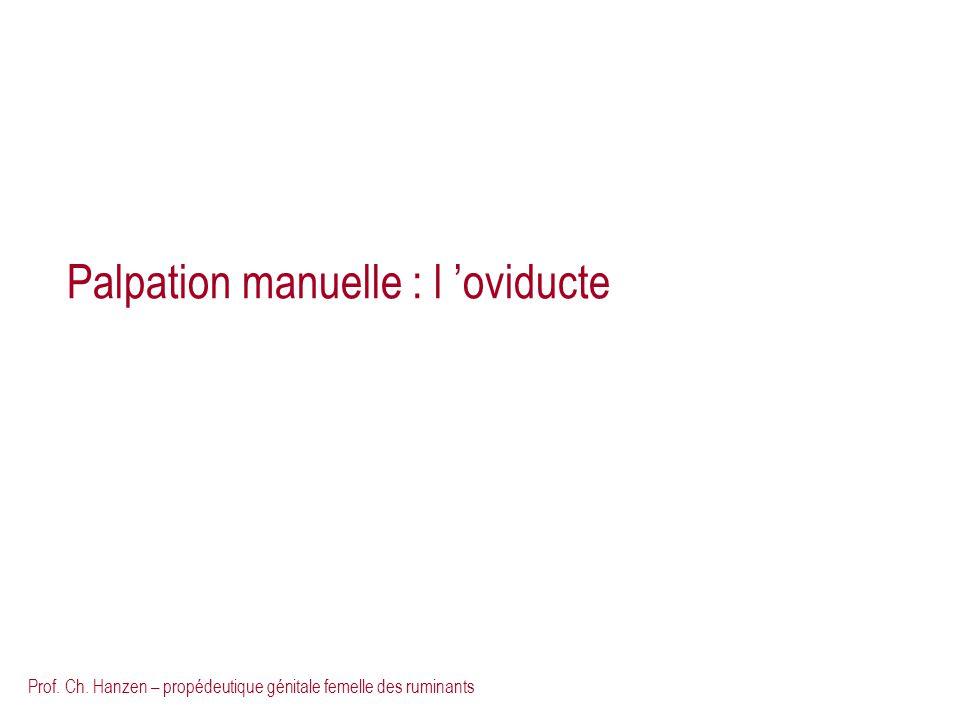 Prof. Ch. Hanzen – propédeutique génitale femelle des ruminants Palpation manuelle : l oviducte