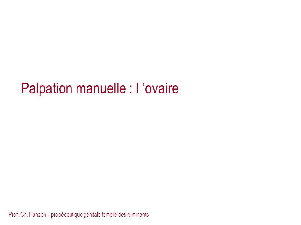 Prof. Ch. Hanzen – propédeutique génitale femelle des ruminants Palpation manuelle : l ovaire