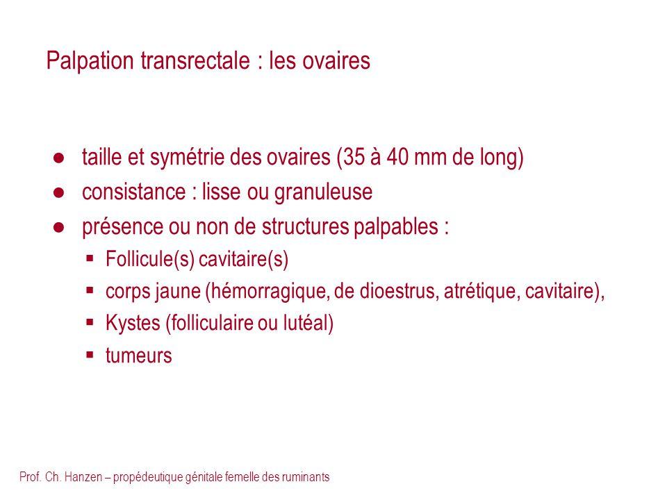 Prof. Ch. Hanzen – propédeutique génitale femelle des ruminants Palpation transrectale : les ovaires taille et symétrie des ovaires (35 à 40 mm de lon