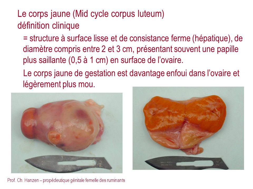 Prof. Ch. Hanzen – propédeutique génitale femelle des ruminants Le corps jaune (Mid cycle corpus luteum) définition clinique = structure à surface lis
