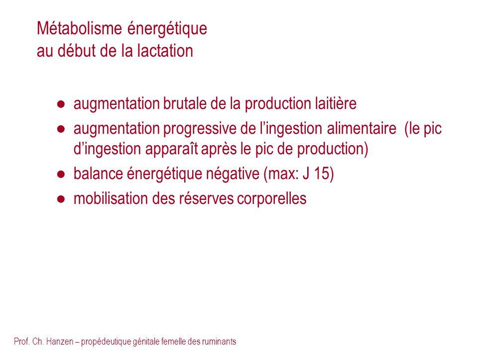 Prof. Ch. Hanzen – propédeutique génitale femelle des ruminants Métabolisme énergétique au début de la lactation augmentation brutale de la production