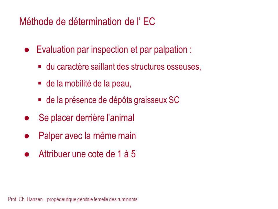 Prof. Ch. Hanzen – propédeutique génitale femelle des ruminants Méthode de détermination de l EC Evaluation par inspection et par palpation : du carac