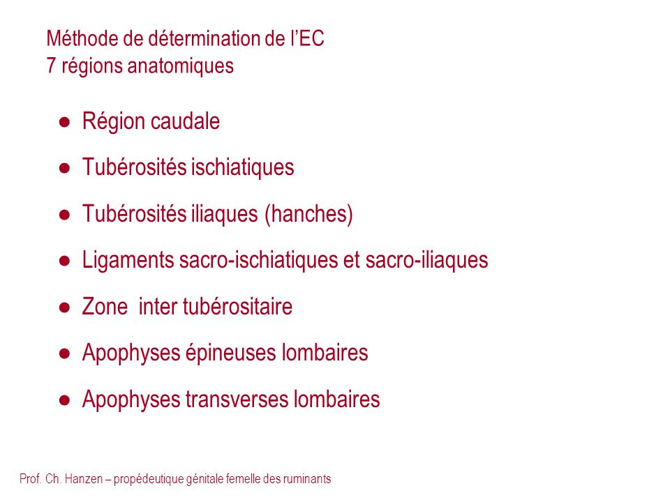Prof. Ch. Hanzen – propédeutique génitale femelle des ruminants Méthode de détermination de lEC 7 régions anatomiques Région caudale Tubérosités ischi