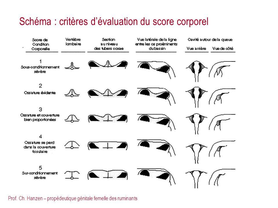 Prof. Ch. Hanzen – propédeutique génitale femelle des ruminants Schéma : critères dévaluation du score corporel