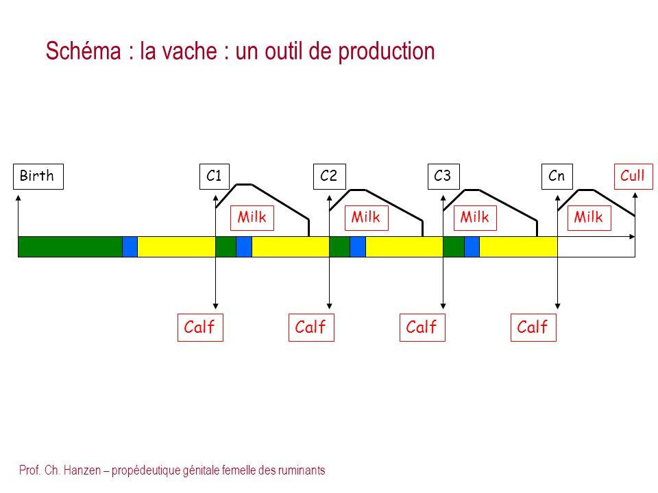 Prof. Ch. Hanzen – propédeutique génitale femelle des ruminants C1C2CnC3Cull Birth Calf Milk Schéma : la vache : un outil de production