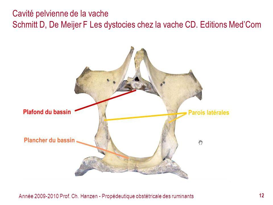 Année 2009-2010 Prof. Ch. Hanzen - Propédeutique obstétricale des ruminants 12 Cavité pelvienne de la vache Schmitt D, De Meijer F Les dystocies chez
