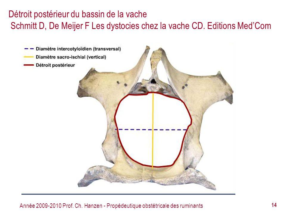Année 2009-2010 Prof. Ch. Hanzen - Propédeutique obstétricale des ruminants 14 Détroit postérieur du bassin de la vache Schmitt D, De Meijer F Les dys