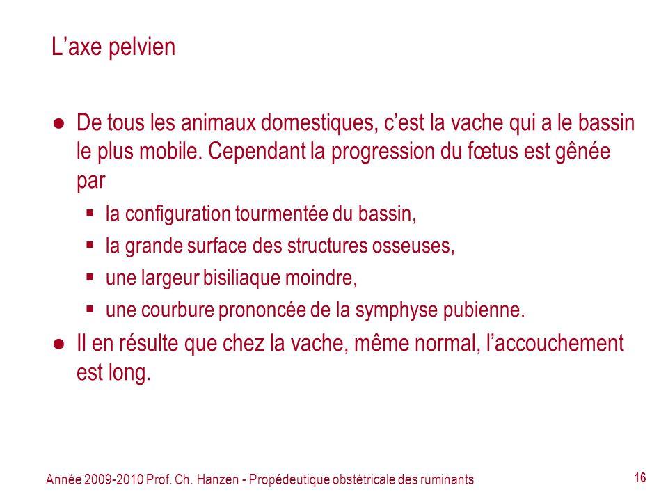 Année 2009-2010 Prof. Ch. Hanzen - Propédeutique obstétricale des ruminants 16 Laxe pelvien De tous les animaux domestiques, cest la vache qui a le ba