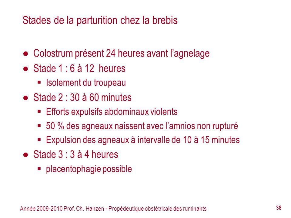 Année 2009-2010 Prof. Ch. Hanzen - Propédeutique obstétricale des ruminants 38 Stades de la parturition chez la brebis Colostrum présent 24 heures ava