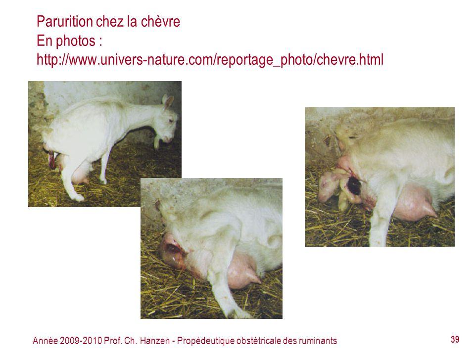 Année 2009-2010 Prof. Ch. Hanzen - Propédeutique obstétricale des ruminants 39 Parurition chez la chèvre En photos : http://www.univers-nature.com/rep